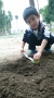 105.12.6小小農夫種菜去-